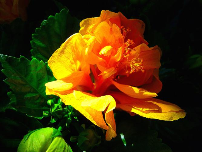 çiçek Sunumda Büyük Keşif çiçek Sepeti E Ticaret Rehber